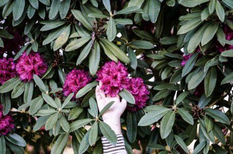 Planter i haven: Skab en have, der blomstrer hele året