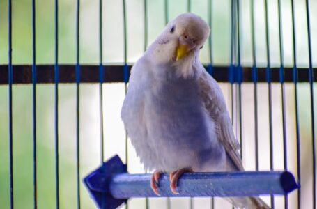 Har du plads til en fugl i dit hjem?